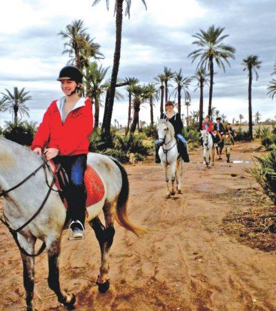 balade-a-cheval-de-la-palmeraie-marrakech